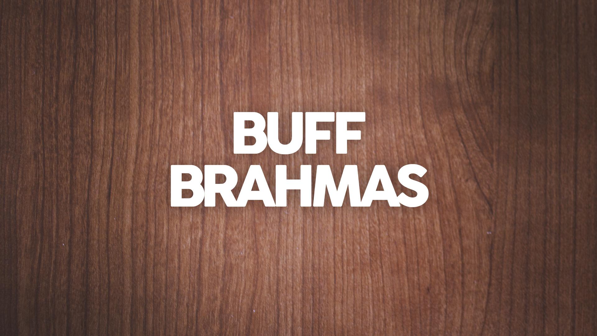 Buff Brahmas